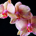 Orchids by Bruce Beck