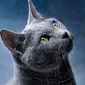 Russian Blue Cat by Nailia Schwarz