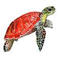 Sea Turtle by Suren Nersisyan