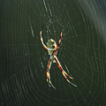 Spider On A Web by Robert Hamm