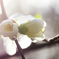 Spring by Alex Simon