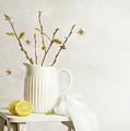 Spring Still Life by Amanda Elwell