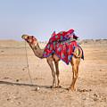 Thar Desert - India by Joana Kruse