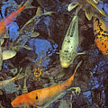 The Koi Pond by Marc Bittan