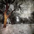 The Winter Time by Angel Ciesniarska