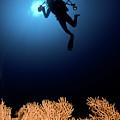 Underwater Photography by Hagai Nativ