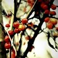 Wild Berries by Frances Lewis