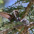 7311 Tilted Nest Feeding by Craig Corwin