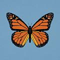 74- Monarch Butterfly by Joseph Keane
