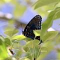 7759 - Butterfly by Travis Truelove