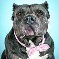 Ava by Pit Bull Headshots by Headshots Melrose