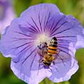 Blue Flower by Patrick  Short