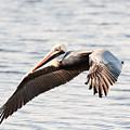 Pelican In Flight by Michael McStamp
