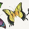 8 Butterflies by Cynthia Schumann
