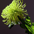 Floral Still Life by Robert Ullmann