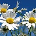 Flower by Bert Mailer