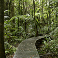 Forest Boardwalk by Les Cunliffe
