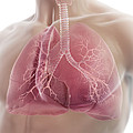 Lungs by Science Picture Co