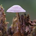 Mushrooms by Brothers Beerens