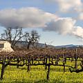 Napa Valley Vineyard by Mountain Dreams