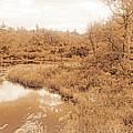Stream In Autumn, Pocono Mountains, Pennsylvania by A Gurmankin