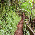 The El Yunque National Forest, Puerto Rico by Nicole Badger