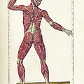 The Science Of Human Anatomy by National Library of Medicine