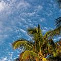 8156- Palm Tree by David Lange