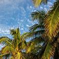 8167- Palm Tree by David Lange