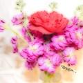 #8742 Soft Flowers by Barbara Tristan