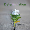 88- Determination by Joseph Keane