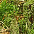 Mosses And Liverworts 8861 by Michael Peychich