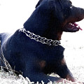 Dog by Anna J Davis