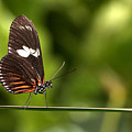 Butterfly by Theo Tan