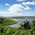 Cape Cod Salt Pond by Michelle Himes