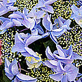 Close-up Of Flowers by Panoramic Images
