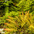 Fall Color Fern by Thomas R Fletcher
