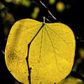Fall Leaf by Robert Ullmann