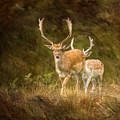Fallow Deer by Angel Ciesniarska