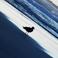Bird On A Beach  by Jenny Potter