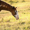 Horse In The Countryside  by Rob D