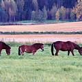 Horses Of The Fall by Jouko Lehto