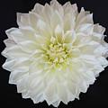 Macro Shot Of Flower by Karen Neimeier