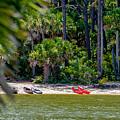 Palmetto Forest On Hunting Island Beach by Alex Grichenko