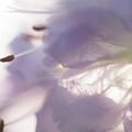 Pastel Purple Flowers by Michelle Himes