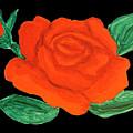 Red Rose, Painting by Irina Afonskaya