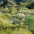 Saguaro Cactus Carnegiea Gigantea by Panoramic Images