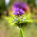 Silybum Eburneum Milk Thistle by Humourous Quotes