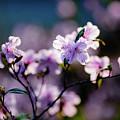 Spring by Hristo Shanov