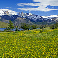Springtime In Torres Del Paine by Michele Burgess